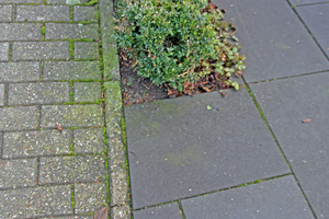 "<div class=""bildnummer"">9</div><div class=""bildtext_en"">Green deposits on the concrete block pavement of the street (on the left of the picture)</div>"