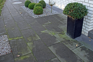 "<div class=""bildnummer"">5</div><div class=""bildtext_en"">Green deposits on the pavement where plants are positioned </div>"
