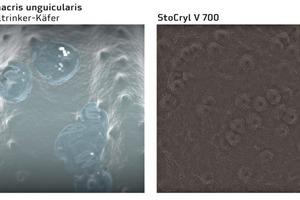 """<div class=""""bildtext"""">Als Vorbild für die neuartige Beschichtung auf Acrylatbasis StoCryl V 700 diente der Nebeltrinker-Käfer</div>"""